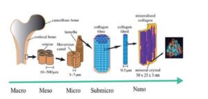 Des chercheurs testent des structures d'hydroxyapatite imprimées en 3D pour la régénération osseuse