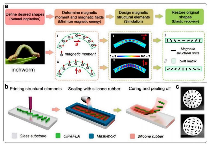 Des chercheurs chinois conçoivent une robotique biomimétique imprimée en 3D