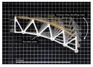 Impression 4D à Singapour: des chercheurs associent des mécanismes conformes à des biopolymères de chitosane
