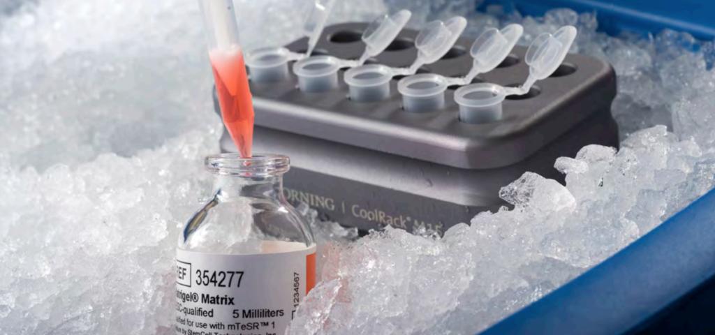 Allevi et Corning présentent le premier protocole de bioimpression avec Matrigel