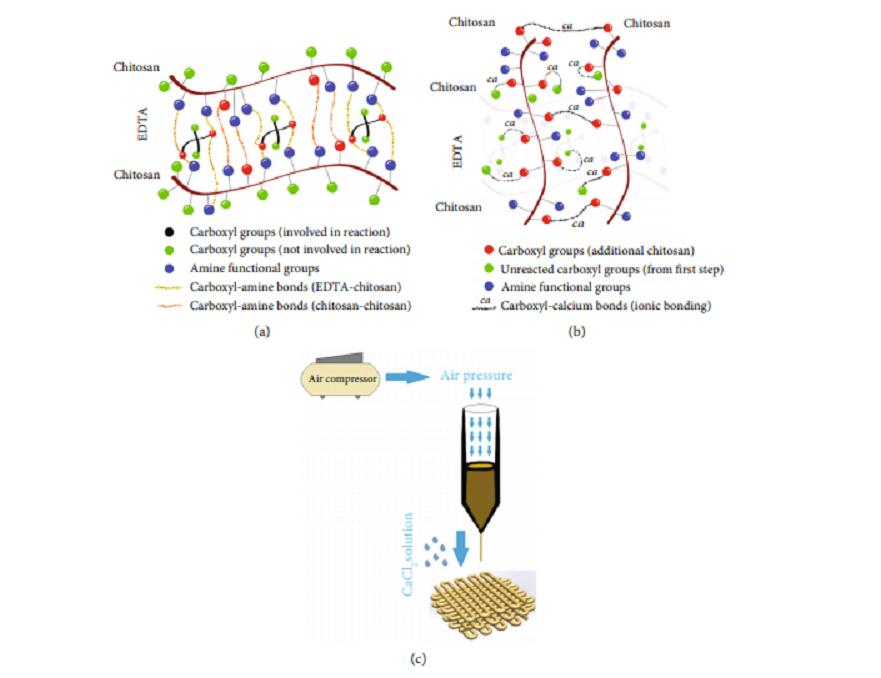 Ingénierie des tissus cartilagineux via la caractérisation et l'application de Bioink à base de carboxyméthyl chitosane