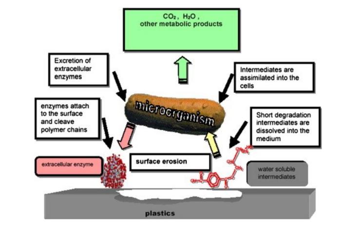 Impression 3D avec des bioplastiques: ingénierie de mélanges PHA biodégradables
