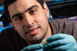 Des chercheurs en riz impriment en 3D avec des lasers et du sucre pour créer des réseaux vasculaires complexes