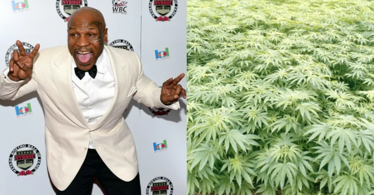 Mike Tyson est désormais autorisé à imprimer des boissons au cannabis en 3D