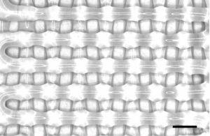 La bio-impression pilotée par l'IA accélère l'ingénierie tissulaire