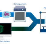 Ethicon de J&J et FluidForm vont collaborer à la création de tissus humains avec la bioprinture FRESH.