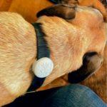 Collier pour chien Airtag à profil bas #3Dprinting #3DThursday